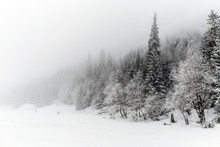 Winter White Forest With Snow,...