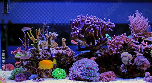 Coral reef aquarium tank scenic moment