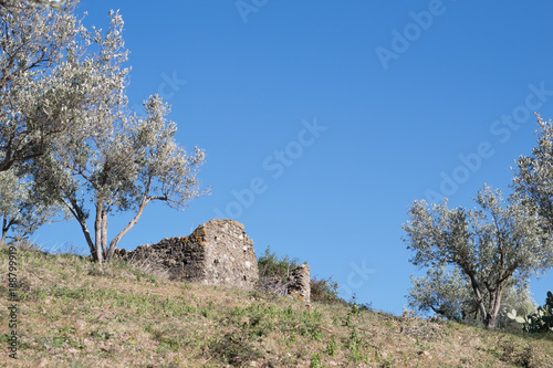 Tuinposter Olijfboom Ruined structure surrounded by olive trees against blue sky.