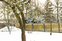 Backyard In Snowy White Winter. Snow All Over The Trees In Garden