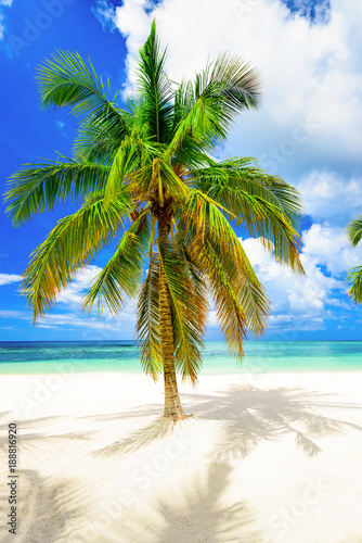 Staande foto Strand paradise beach beautiful white sand with palm tree in the resort of caribbean