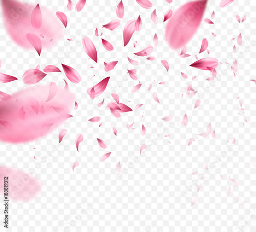 Pink sakura falling petals background. Vector illustration Wall mural