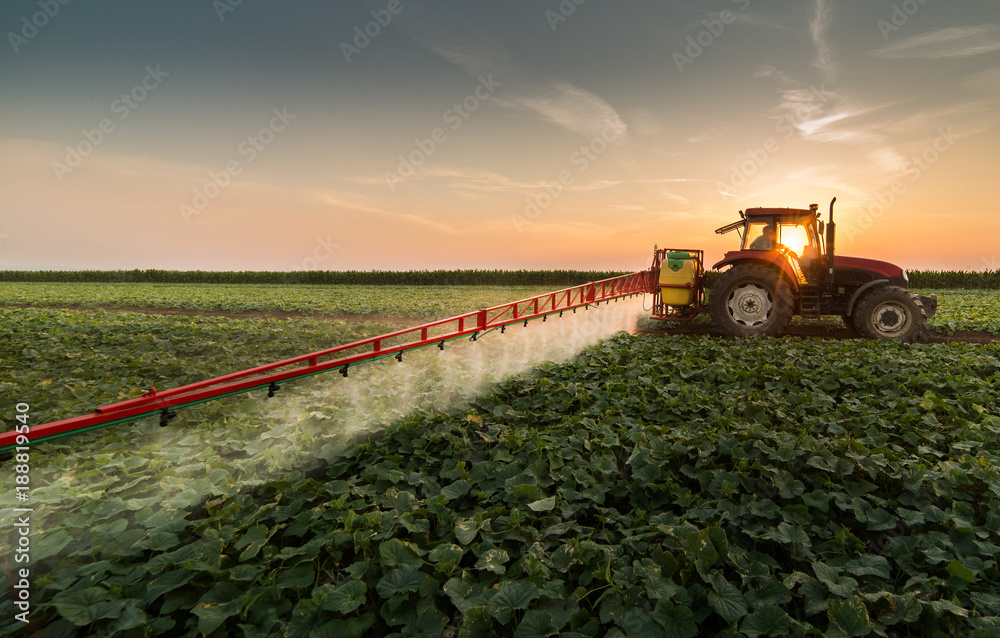 Fototapety, obrazy: Tractor spraying pesticides on vegetable field with sprayer at spring