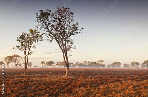 Dawn mist in the Australian Outback (Darwin, Northern Territory)