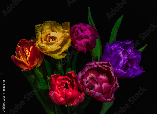 Spoed Foto op Canvas Bloemen Surrealistic fine art floral still life colorful flower macro of a flowering tulip blossom bouquet of six on black background in vivid colors, red, pink, orange, yellow and green leaves