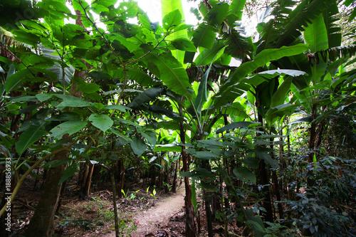 zmiana-klimatu-w-dzungli-zielona-energia-dzika-las-bananowy