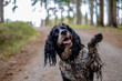 Leinwanddruck Bild - The wet dog gives his paw. Happy dirty dog in the wood.