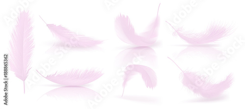 Fotografie, Obraz Vector realistic 3d set of pink bird or angel feathers in various shapes, isolated on background