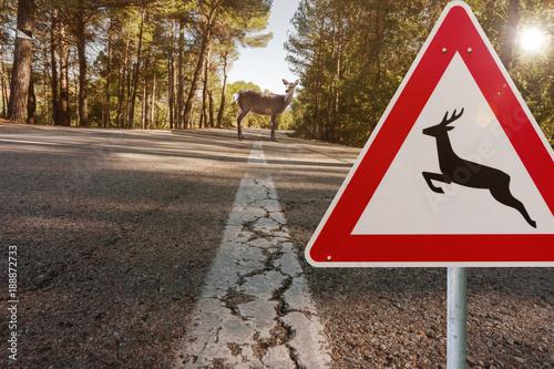 Fotobehang Ree Landstraße mit Wildwechsel Gefahr