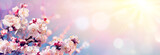 Fototapeta Kwiaty - Pink Blossoms Against Sky At Sunrise - Spring Blooming