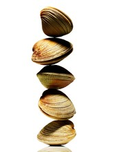 Stack Of Five Clams In Shell