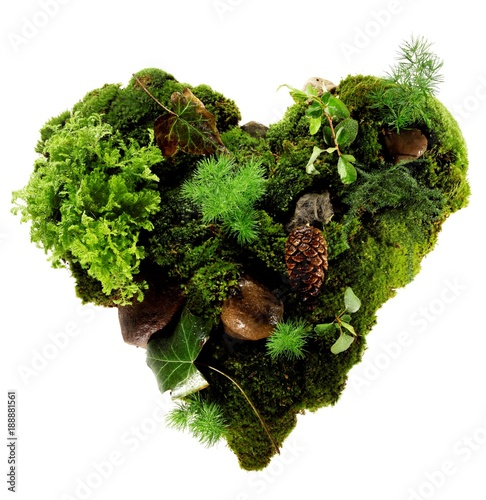 Isolated heart made of green moss, leaves, rocks and pinecone