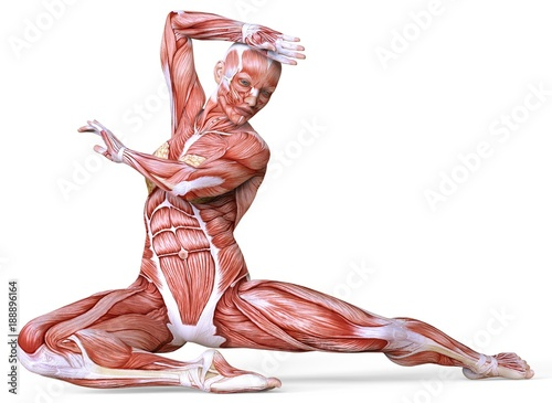 Fényképezés Female anatomy and muscles, body without skin isolated on white