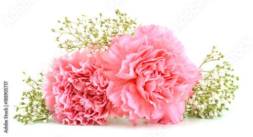 Photo Carnations on white