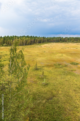 Fotografia, Obraz  Marshland landscape view