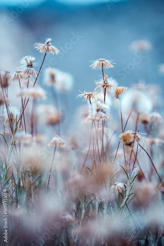 suche-dzikie-rosliny-lakowe-kwiaty-fotografia-plenerowa-z-zimnymi-niebieskimi-kolorami-tajemnicy
