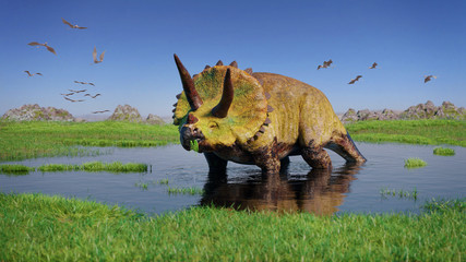 Triceratops horridus dinosaur and a flock of Pterosaurs from the Jurassic era eating water plants in beautiful landscape