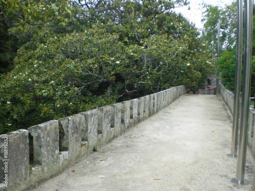 Tuinposter Weg in bos castrelos vigo