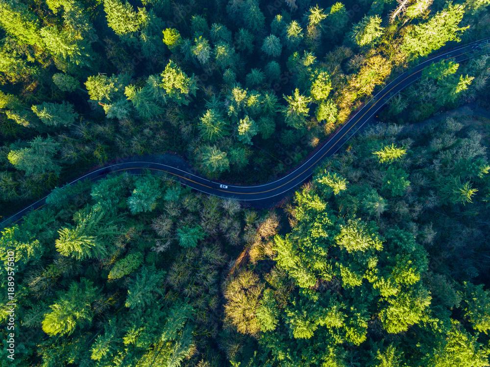 Fototapety, obrazy: Oregon Trail