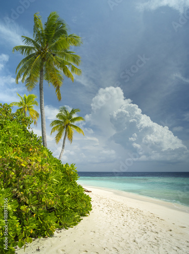 Montage in der Fensternische Tropical strand two beautiful palm on the sand beach in sunny day on Maldives island