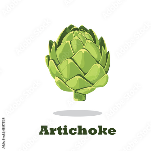 Photo Artichoke. Vector illustration