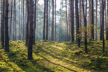 National Park Of Kampinos Fore...