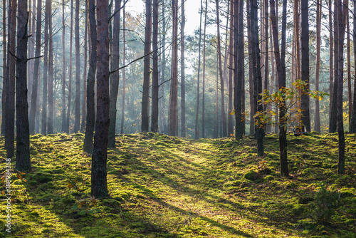 Fototapeten Wald National Park of Kampinos Forest in Masovia region of Poland