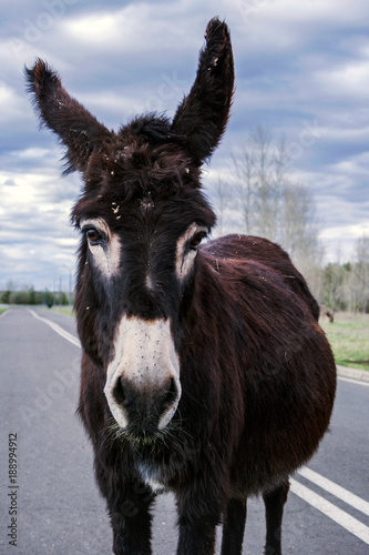 Deurstickers Ezel the donkey walking on a bicycle path