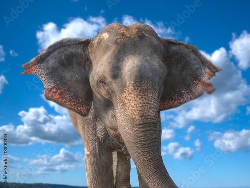 Fotografie, Obraz  elephants in Chitwan