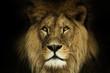 Natural portrait lion