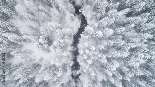 Canvas Prints Forest river Aerial view of the forest and river at winter. The trees are covered with snow
