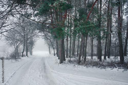 Tuinposter Weg in bos Zima w lesie