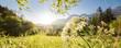 canvas print picture - gelbe Wiesenblumen im Vordergrund