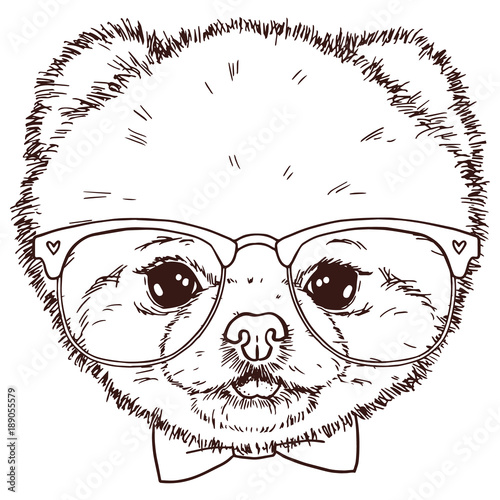 Photo sur Toile Croquis dessinés à la main des animaux Black and white isolated pomeranian dog head with bow-tie and glasses. Vector hand drawn puppy face.