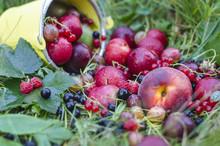 Ripe Mature Fruit And Berrie...