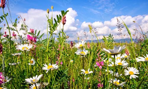 La pose en embrasure Marguerites Frühlingserwachen: Meditation, Glück, Freude, Entspannung: Relaxen in Blumenwiese mit leuchtend schönen Margeriten unter blauem Himmel mit Sonne :)