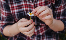 Close-up Of A Girl Picking Petals Off A Daisy Flower