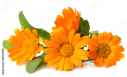 Fotografía  marigold flowers with green leaf isolated on white background ( calendula flower