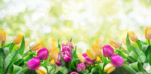 Foto op Plexiglas Tulp Frühlingshintergrund Tulpen Wiese Licht Bokeh