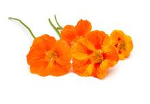 Bouquet Of Orange Nasturtium F...