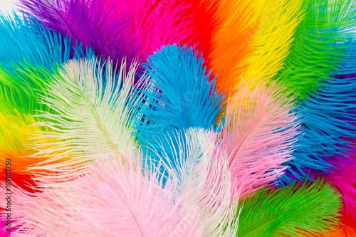 Printed kitchen splashbacks Carnaval Bright colored feathers for a carnival costume. Color confetti. White background.