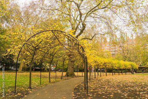 Keuken foto achterwand Begraafplaats golden leaf tunnel in London park in autumn