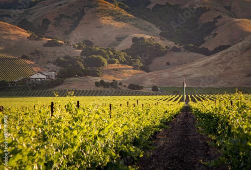 Fotobehang Wijngaard Golden Wine Country Vineyards