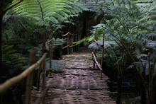 Pathway In Forest Garden