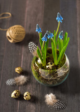 Bouquet Of Muscari Flowers (gr...