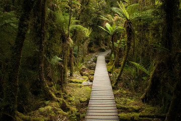 Looking down the path in the forest - Lake Matheson, South Westland, New Zealand