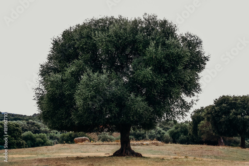 Fototapety, obrazy: Single tree