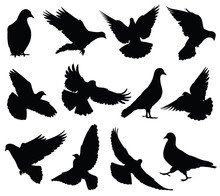 Flying Dove Vector Silhouettes...