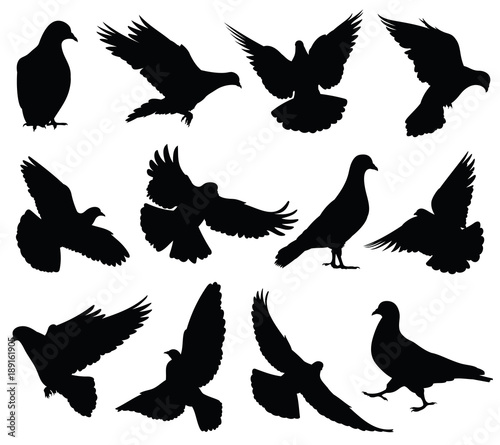 Flying dove vector silhouettes isolated. Pigeons set love and peace symbols Wall mural