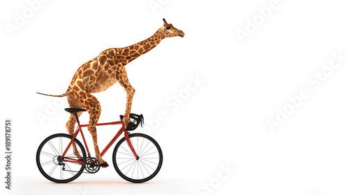 Fotografia, Obraz  Freigestellte Giraffe auf Fahrrad